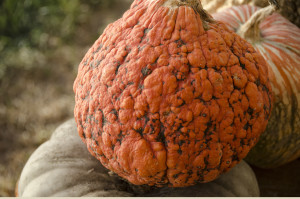 pumpkin_bg_1920